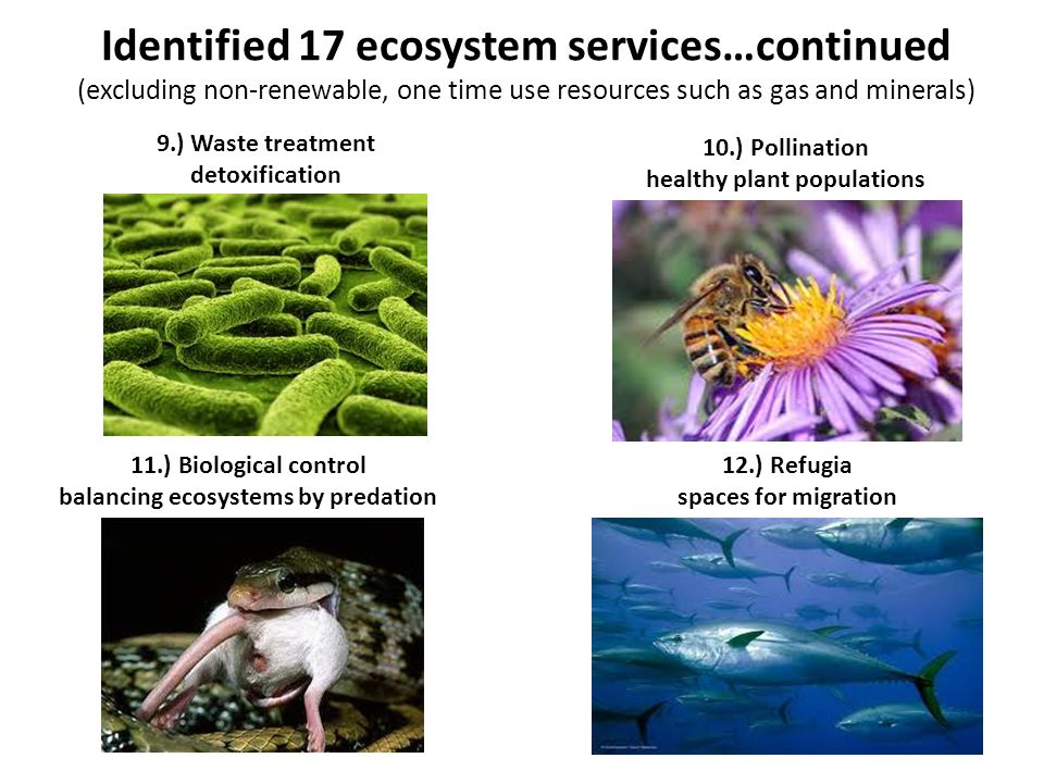 Identified 17 ecosystem services…continued