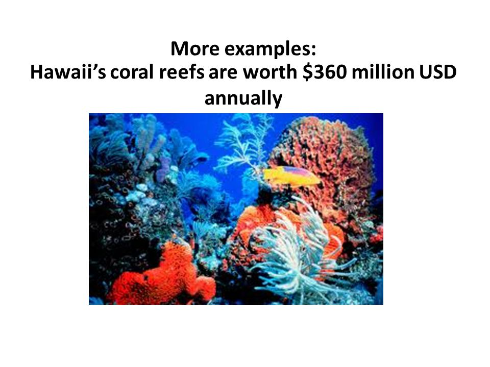 Hawaii's coral reefs are worth $360 million USD annually