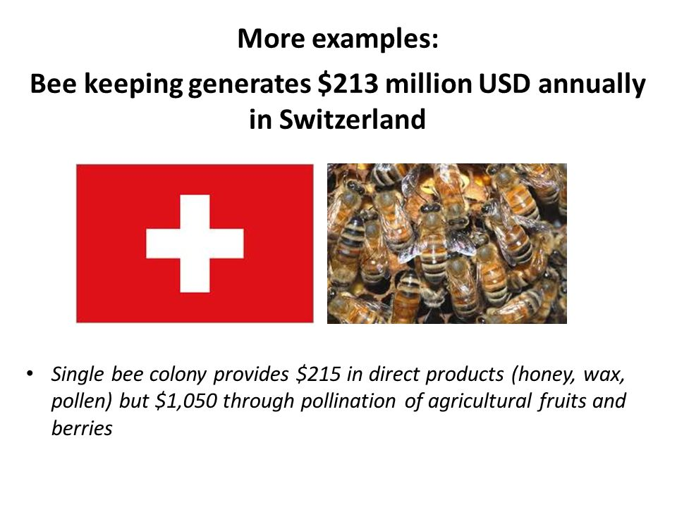 Bee keeping generates $213 million USD annually in Switzerland