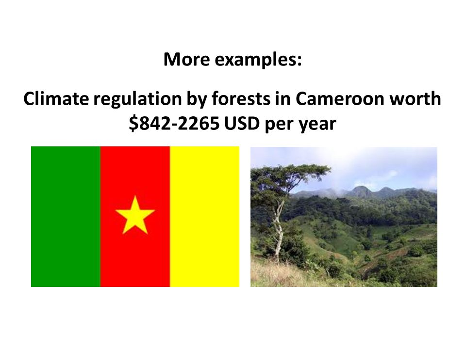 Climate regulation by forests in Cameroon worth $842-2265 USD per year