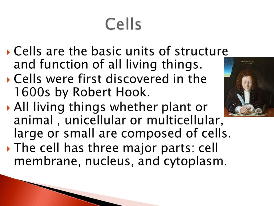 Cells Cells are the basic units of structure and function of all living things. Cells were first discovered in the 1600s by Robert Hook.