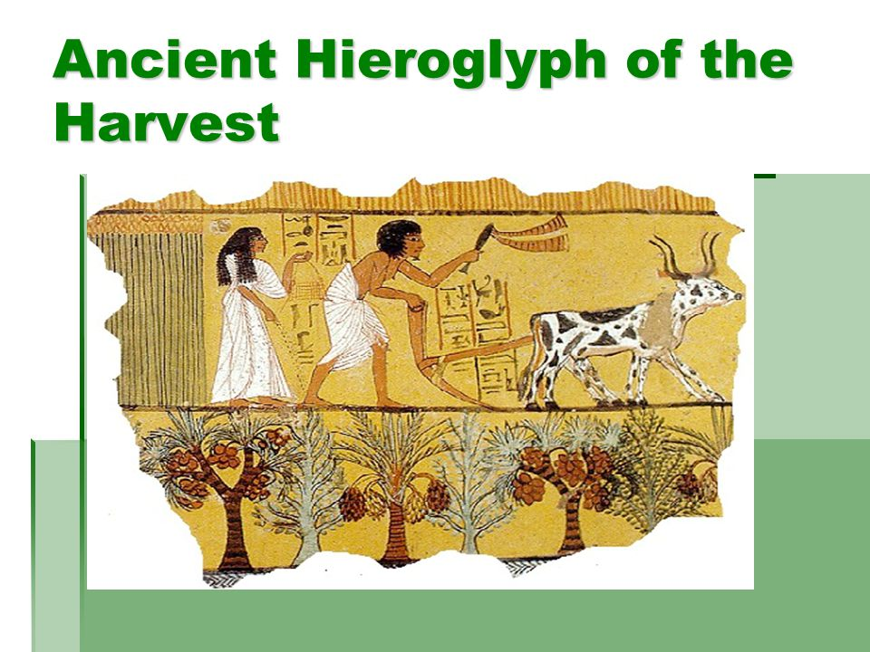 Ancient Hieroglyph of the Harvest