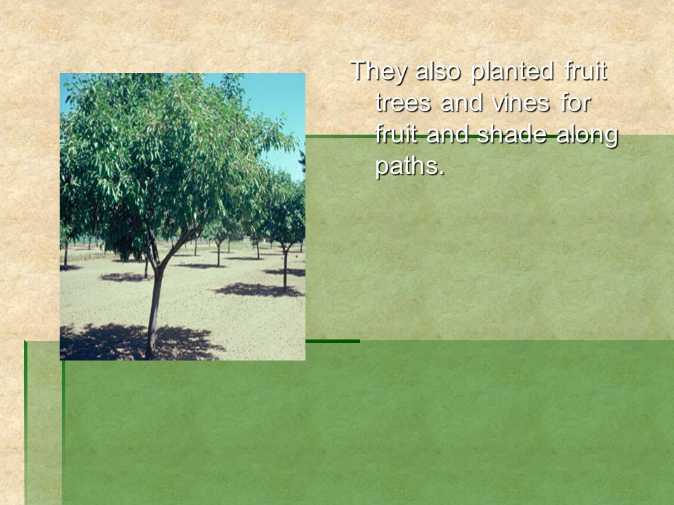 They also planted fruit trees and vines for fruit and shade along paths.
