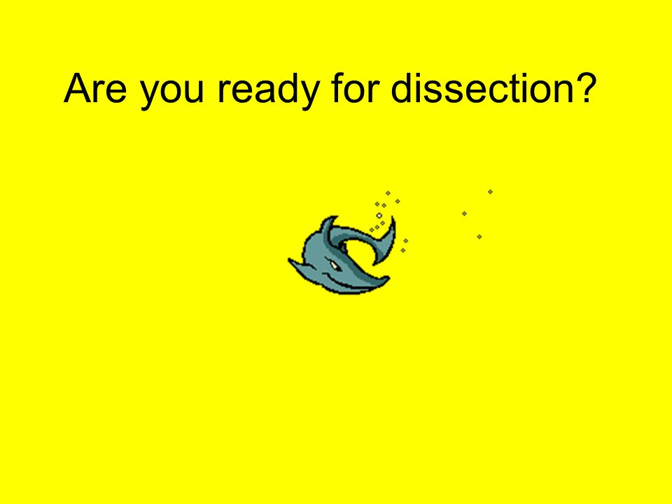 Are you ready for dissection