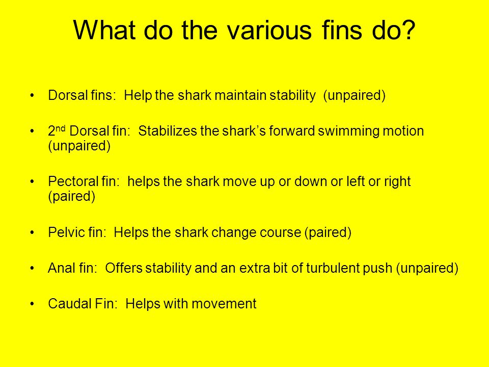 What do the various fins do