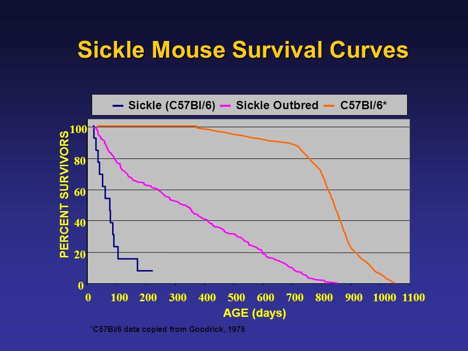 Sickle Mouse Survival Curves