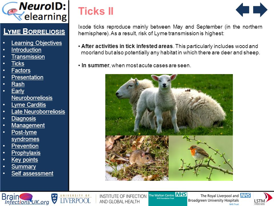 Ticks II Lyme Borreliosis Learning Objectives Introduction