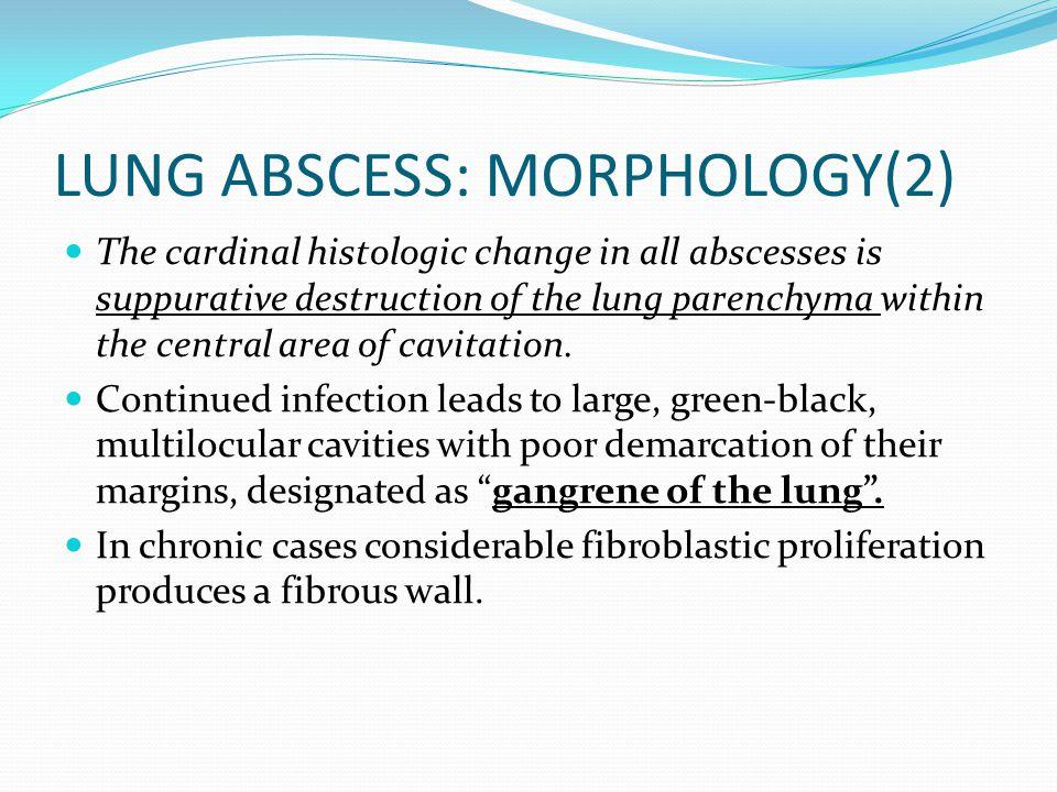 LUNG ABSCESS: MORPHOLOGY(2)