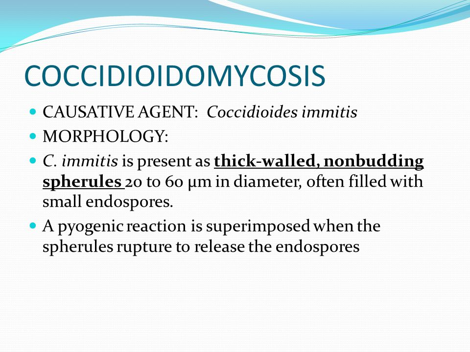COCCIDIOIDOMYCOSIS CAUSATIVE AGENT: Coccidioides immitis MORPHOLOGY: