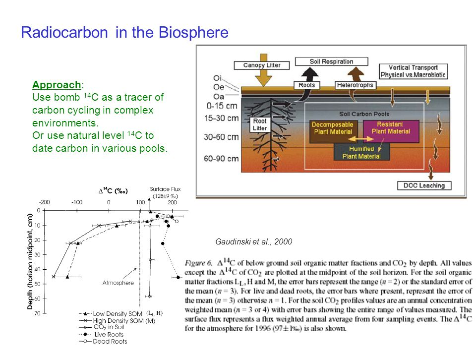 Radiocarbon in the Biosphere