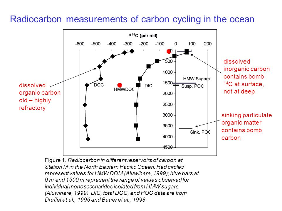 Radiocarbon measurements of carbon cycling in the ocean