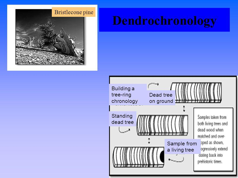 Dendrochronology Bristlecone pine Building a tree-ring chronology