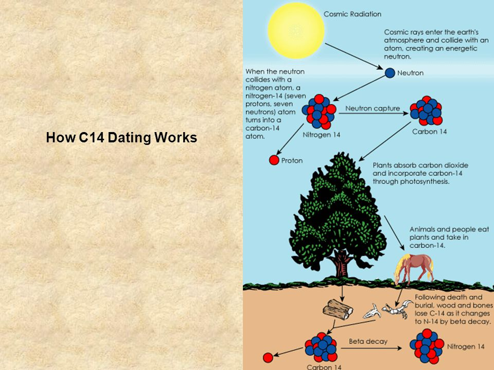 How C14 Dating Works