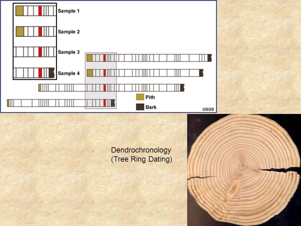 from Paul dendrochronology of tree ring dating