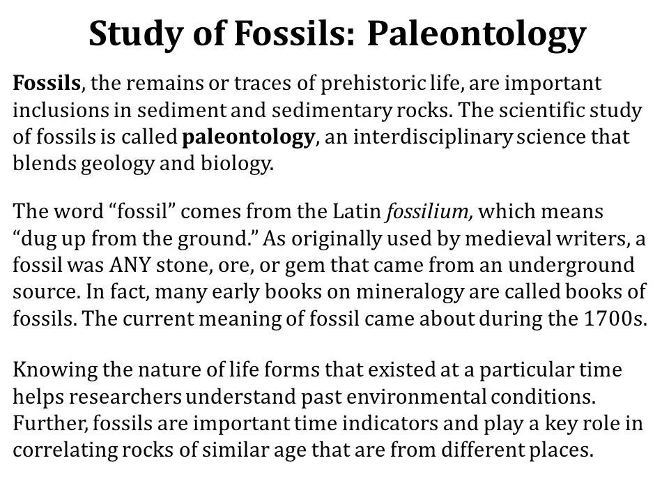 Study of Fossils: Paleontology