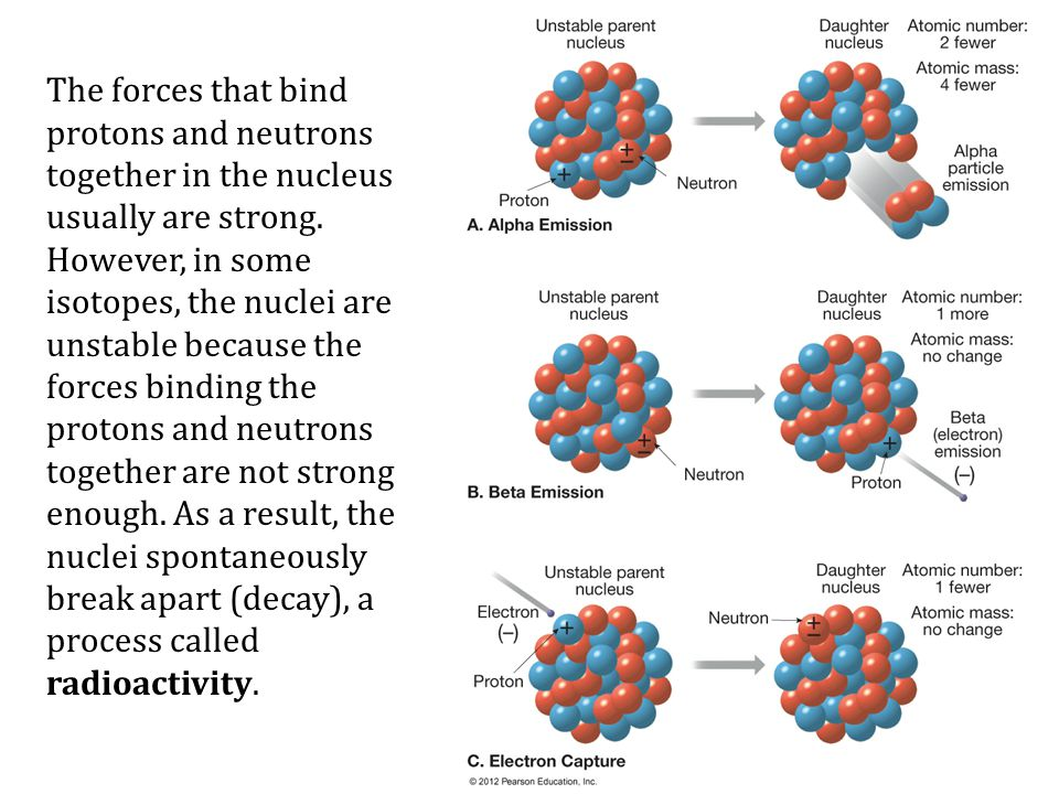 The forces that bind protons and neutrons together in the nucleus usually are strong.