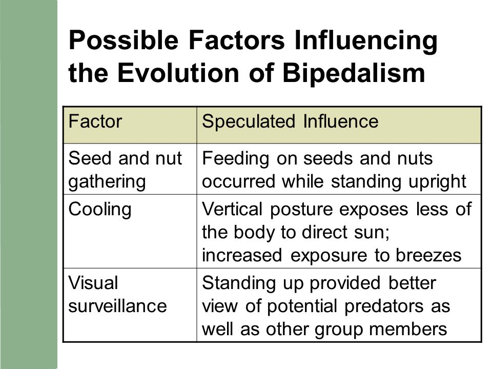 Possible Factors Influencing the Evolution of Bipedalism