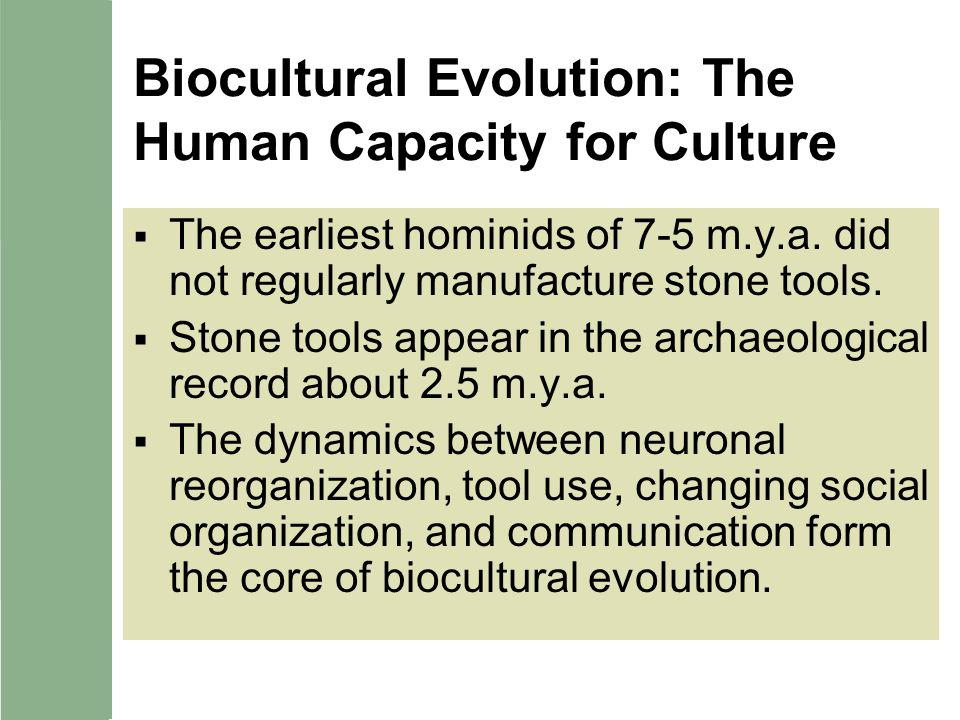 Biocultural Evolution: The Human Capacity for Culture