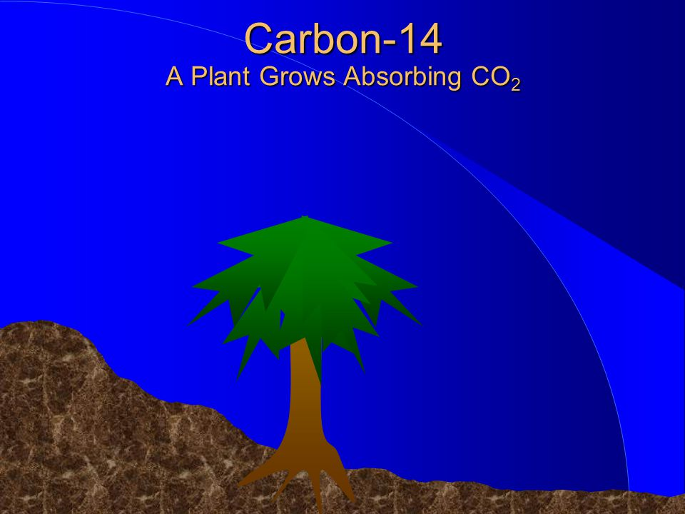 Carbon-14 A Plant Grows Absorbing CO2