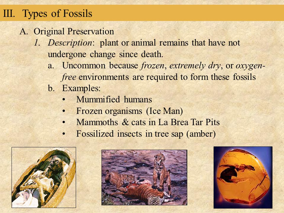 III. Types of Fossils Original Preservation