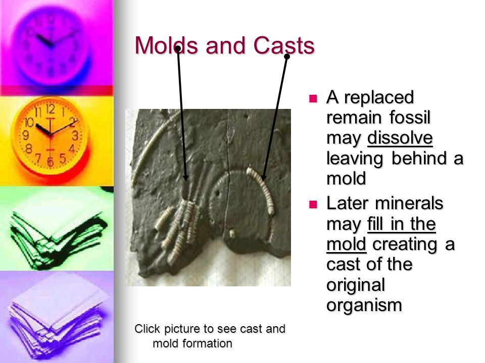 Molds and Casts A replaced remain fossil may dissolve leaving behind a mold.