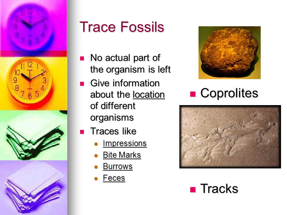 Trace Fossils Coprolites Tracks No actual part of the organism is left