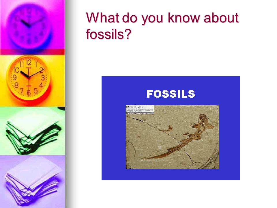 What do you know about fossils