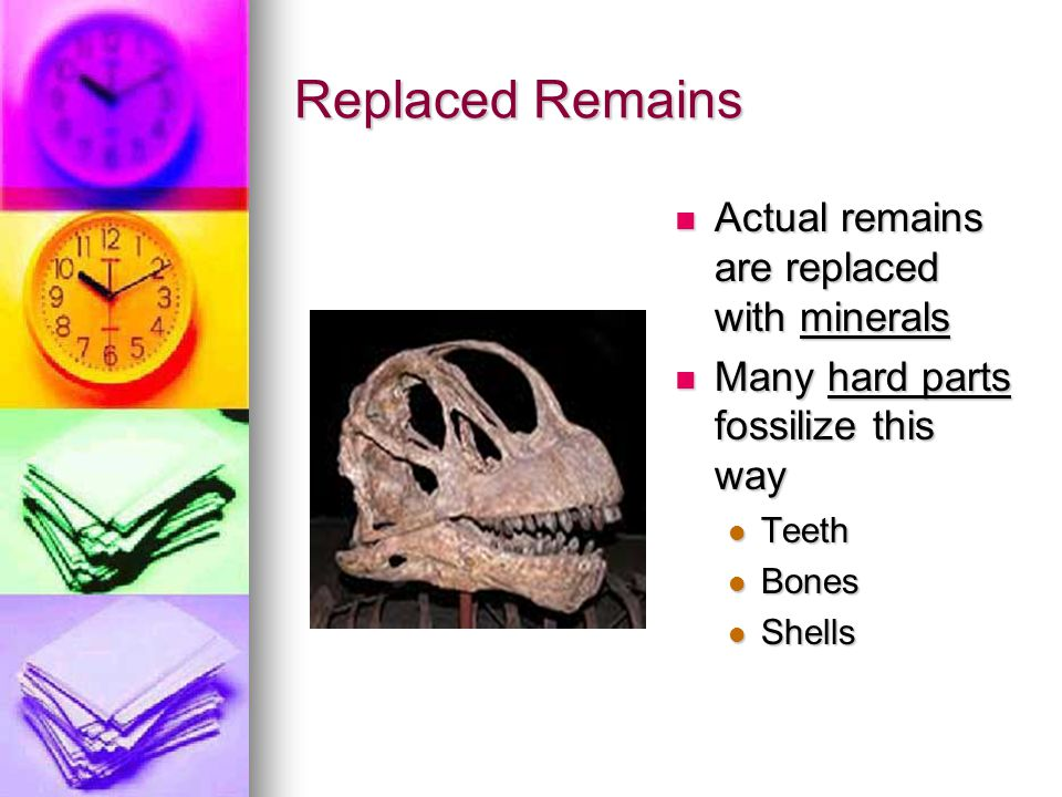 Replaced Remains Actual remains are replaced with minerals