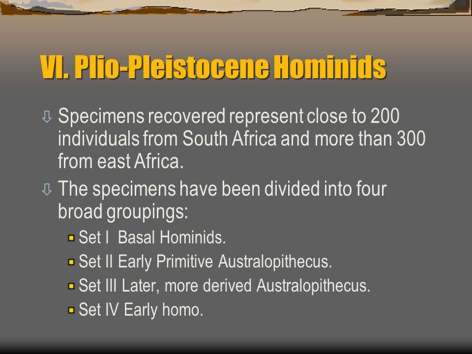 VI. Plio-Pleistocene Hominids
