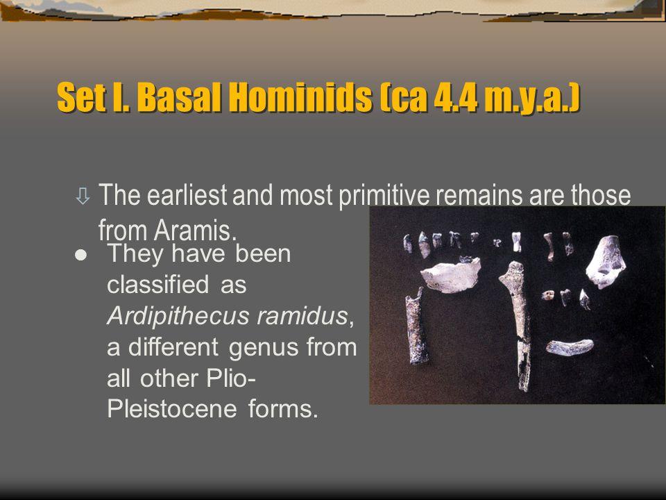 Set I. Basal Hominids (ca 4.4 m.y.a.)