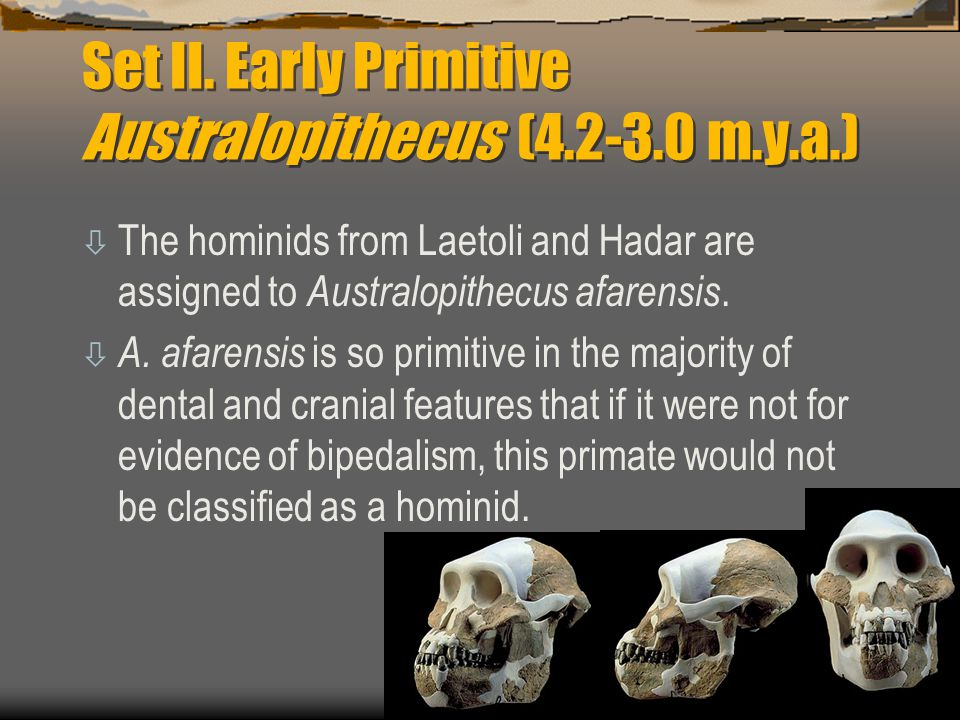 Set II. Early Primitive Australopithecus ( m.y.a.)