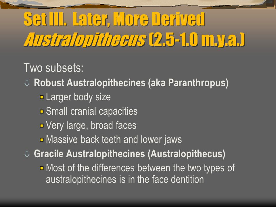Set III. Later, More Derived Australopithecus (2.5-1.0 m.y.a.)