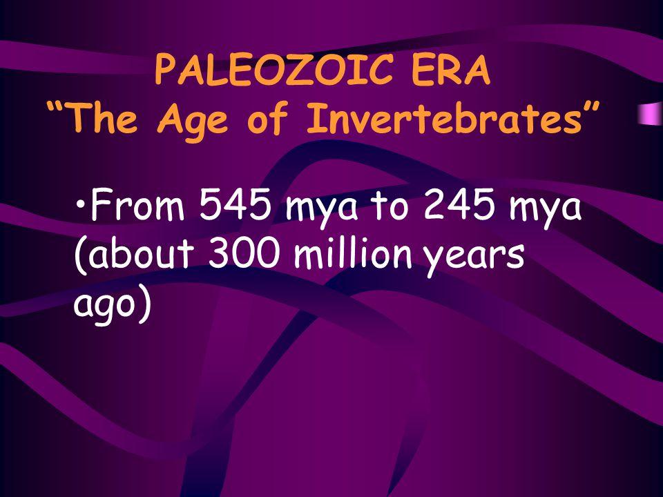 PALEOZOIC ERA The Age of Invertebrates