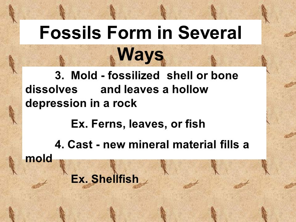 Fossils Form in Several Ways