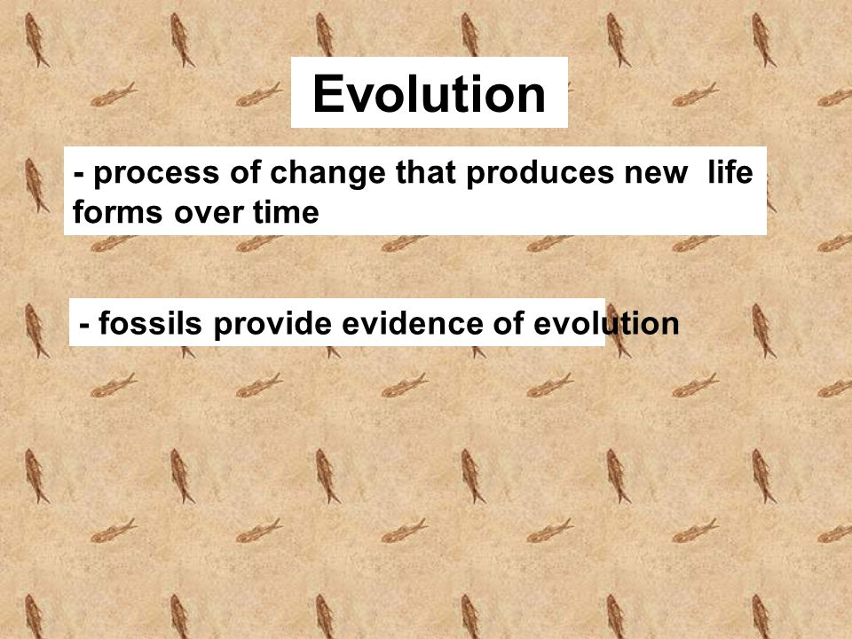 Evolution - process of change that produces new life forms over time