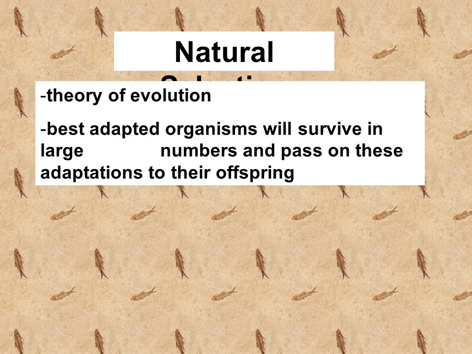 Natural Selection theory of evolution