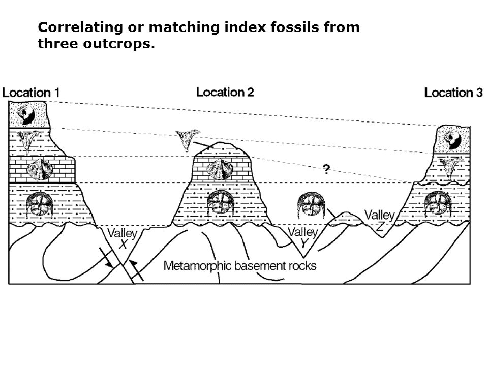 Correlating or matching index fossils from three outcrops.