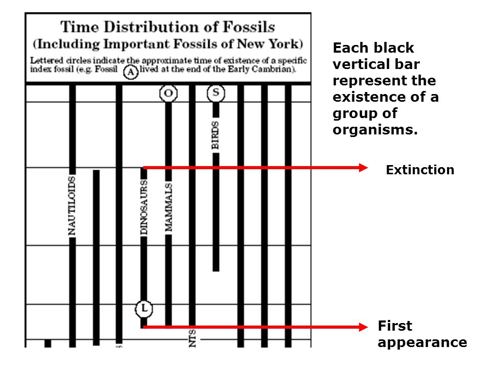 Each black vertical bar represent the existence of a group of organisms.
