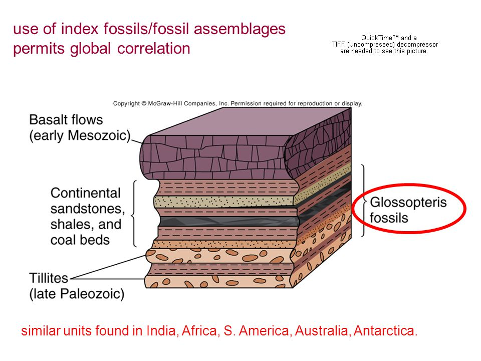 use of index fossils/fossil assemblages permits global correlation