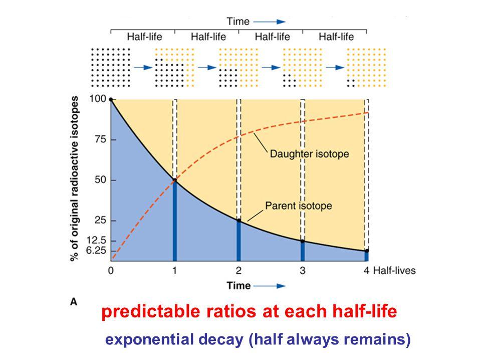 predictable ratios at each half-life