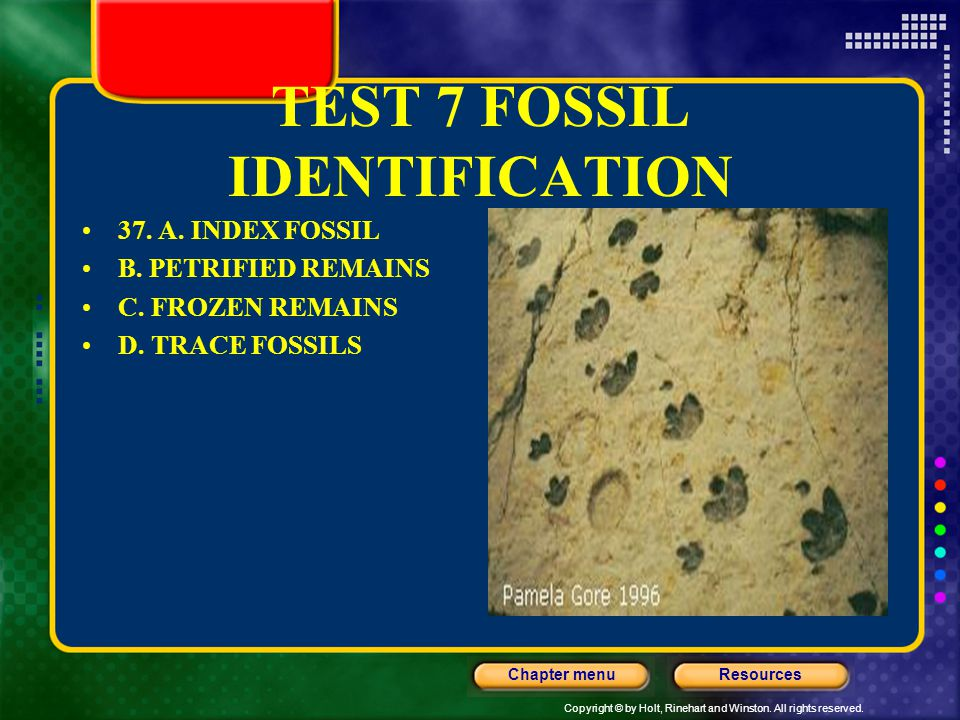 TEST 7 FOSSIL IDENTIFICATION