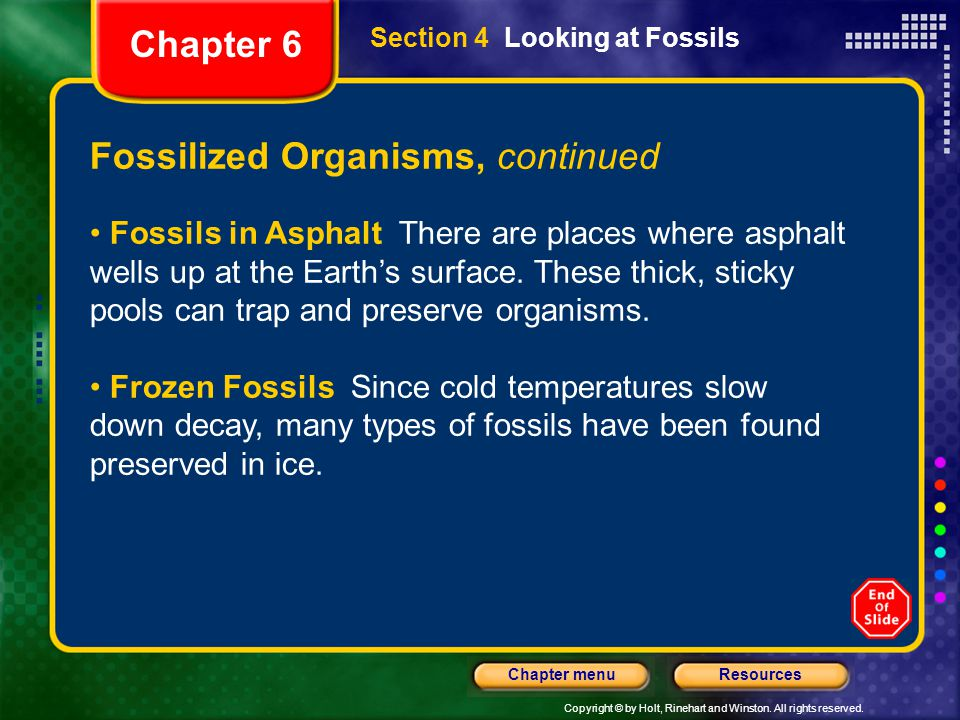 Fossilized Organisms, continued