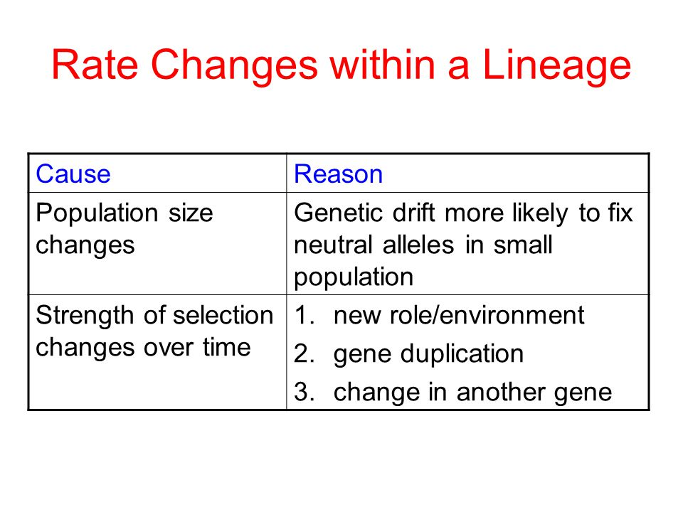Rate Changes within a Lineage