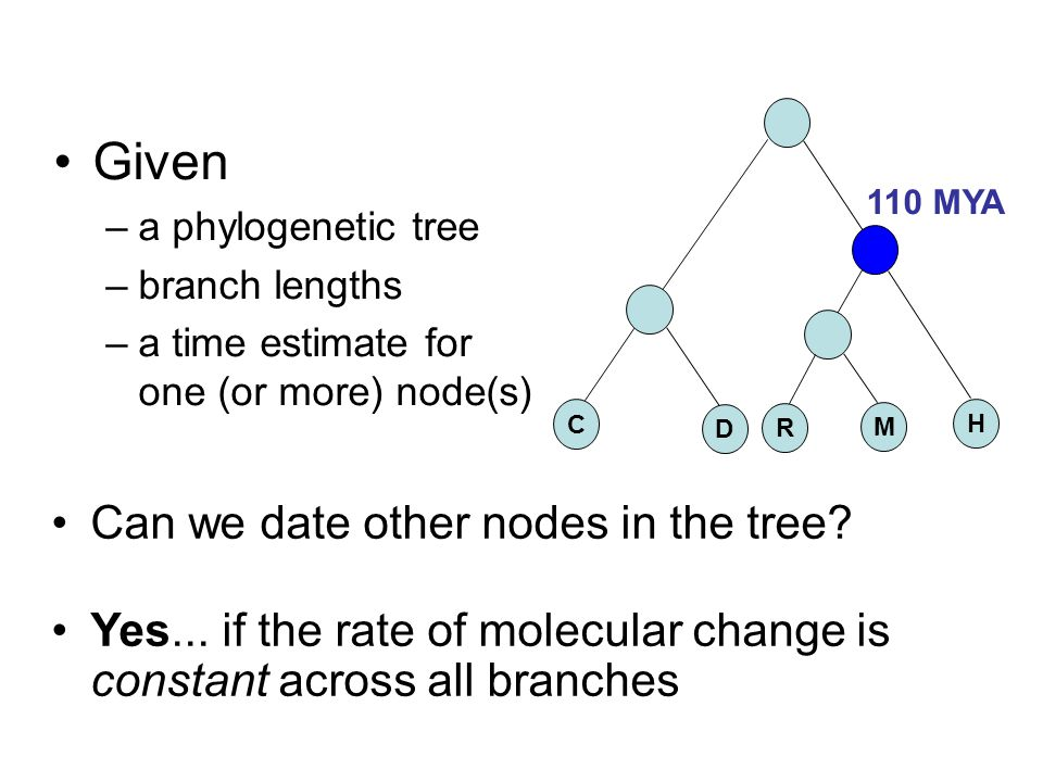 Given Can we date other nodes in the tree