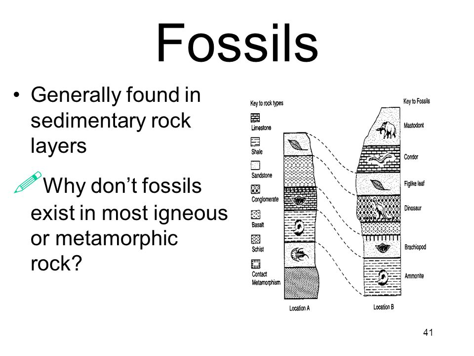 Fossils Why don't fossils exist in most igneous or metamorphic rock
