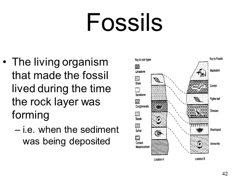 April 17 Fossils. The living organism that made the fossil lived during the time the rock layer was forming.