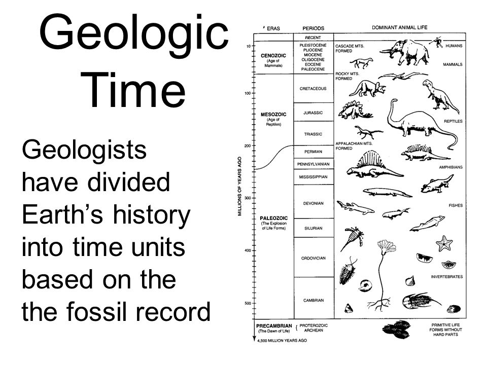 Geologic Time Geologists have divided Earth's history into time units based on the the fossil record.