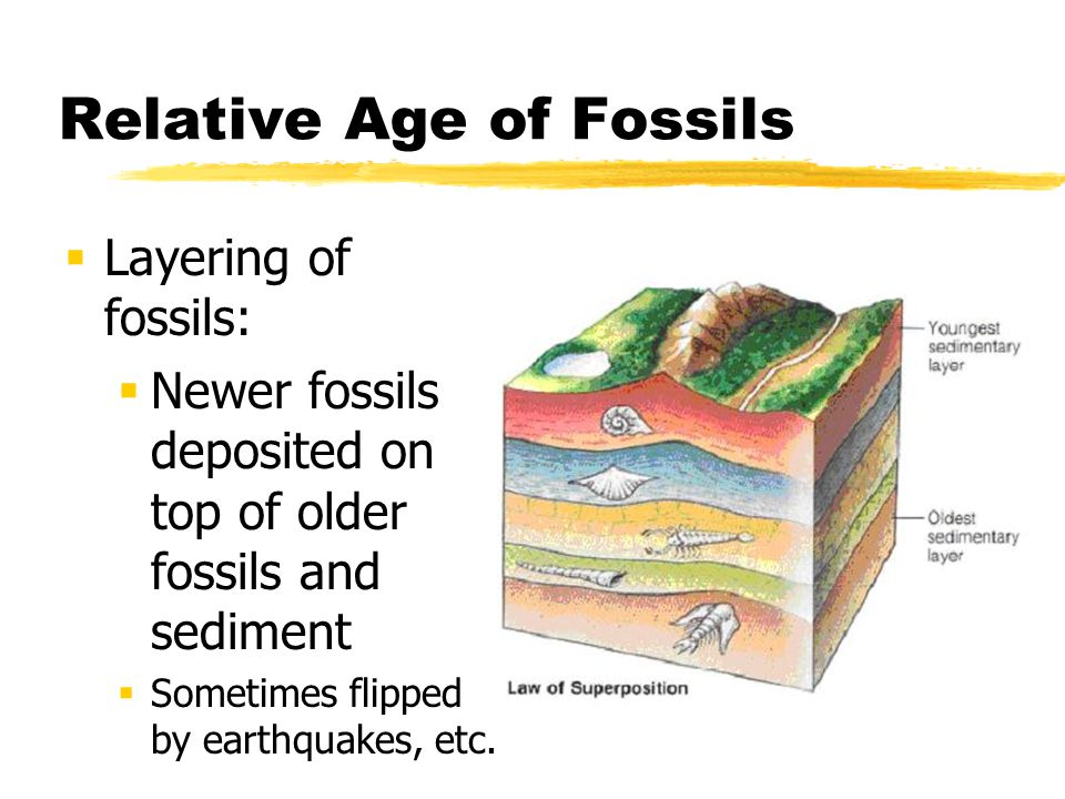 Relative Age of Fossils