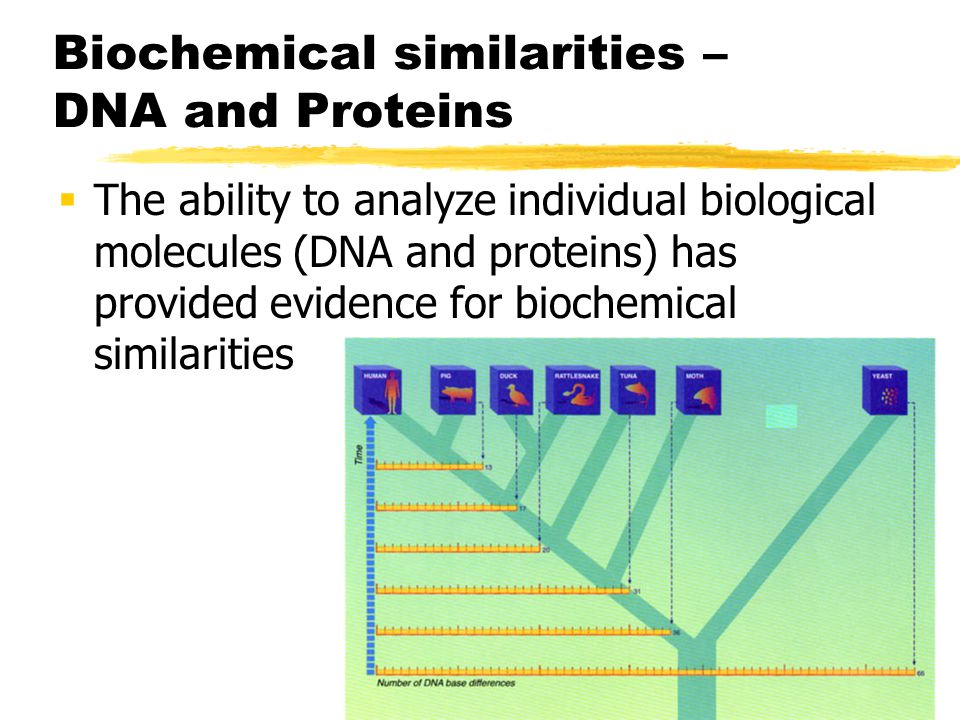 Biochemical similarities – DNA and Proteins