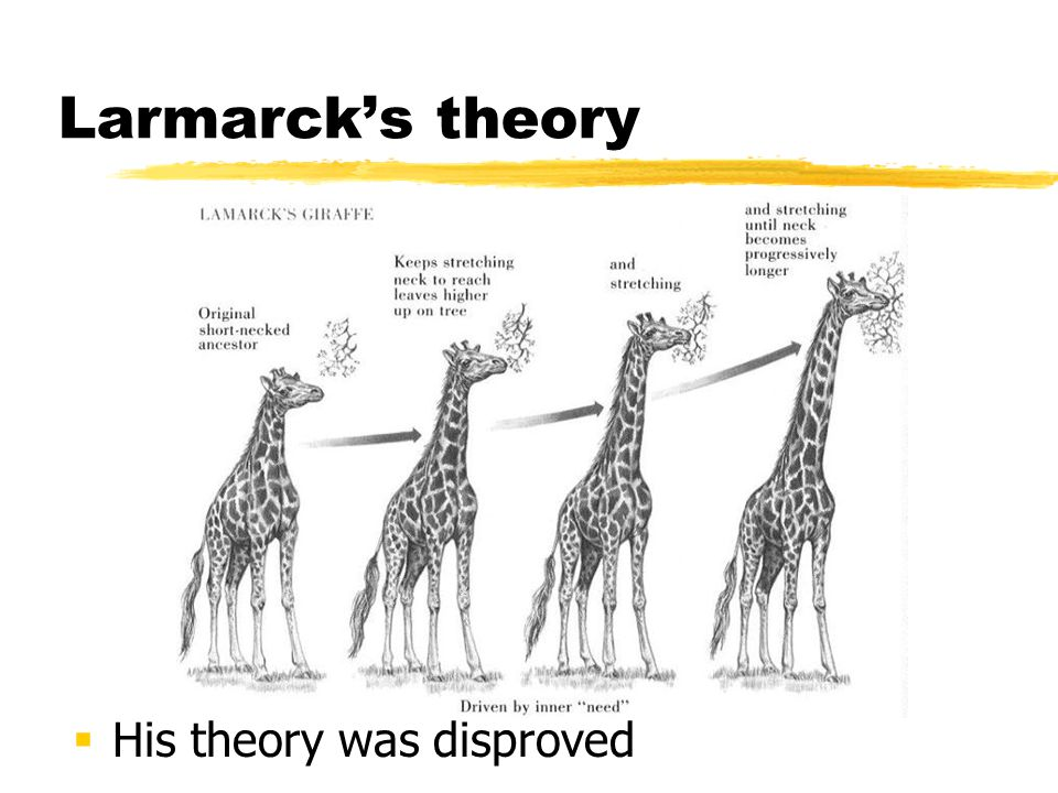 Larmarck's theory His theory was disproved